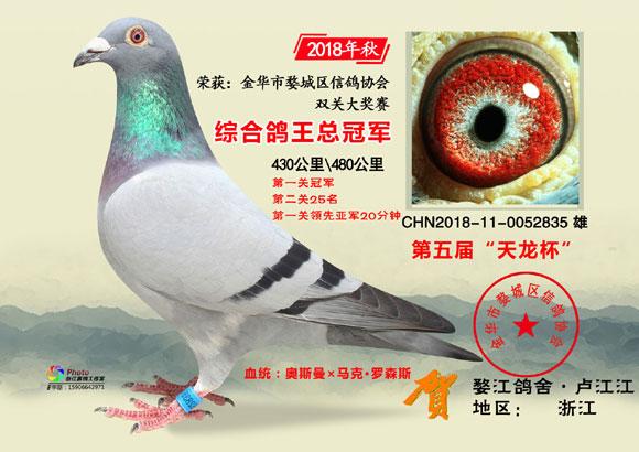 """金华市""""天龙杯""""2018年秋前10名欣赏"""